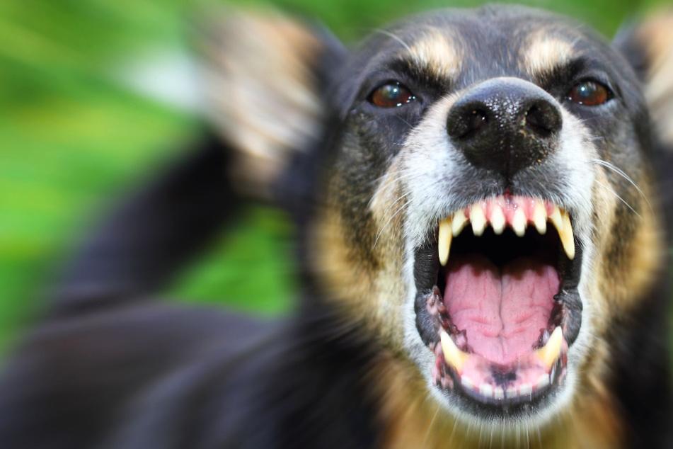 Die Polizei in Butzbach sucht den Halter der beiden aggressiven Hunde (Symbolbild).