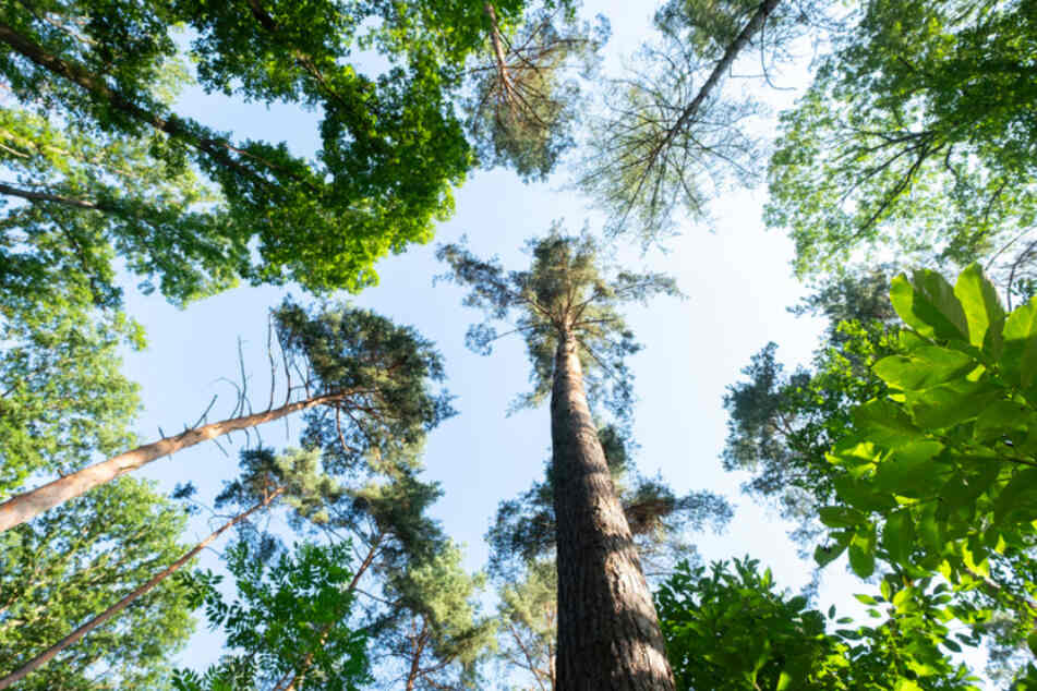 Erschreckende Befunde: Pflanzen der Erde nehmen nicht genug Kohlendioxid auf!