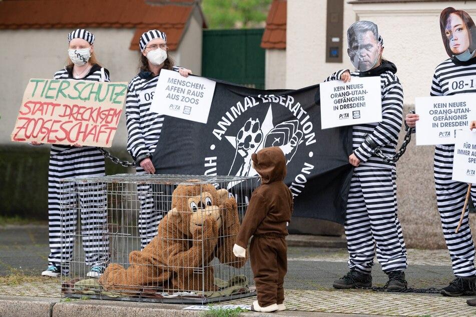 Tierschützer kritisieren die Haltung von Menschenaffen in Käfigen.