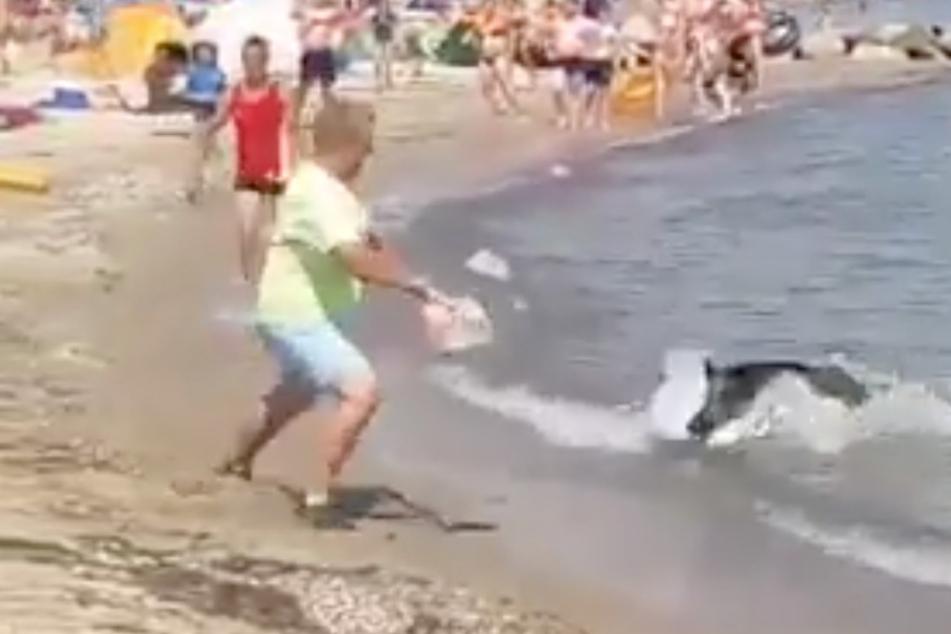 Wildschwein stürmt aus der Ostsee und geht auf Badegäste los