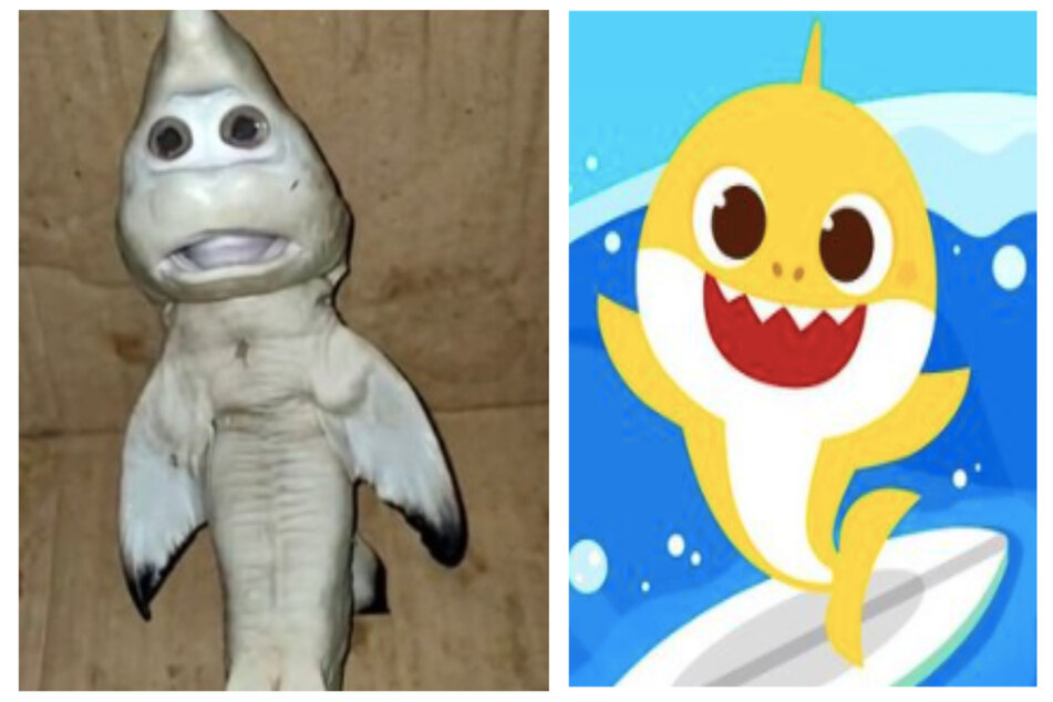 The shark find looked strangely similar to the famed Baby Shark cartoon (collage).