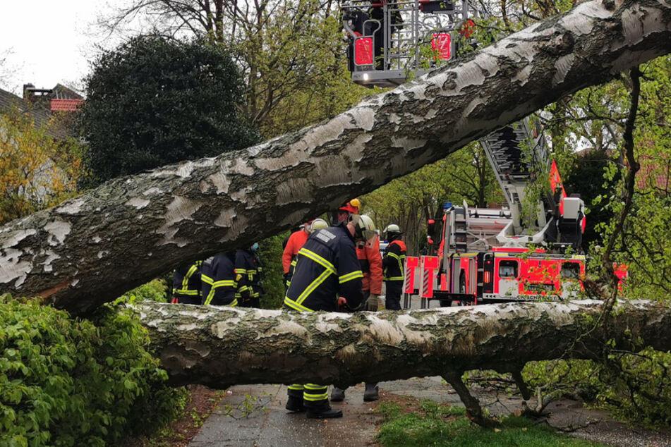 Hamburg: Schwerer Sturm in Hamburg: Feuerwehr rückt mehr als 60 Mal aus