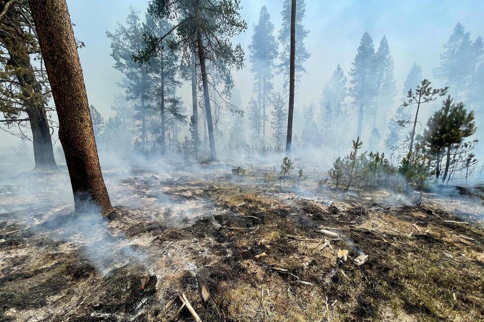 Viele Bäume fielen dem gigantischen Waldbrand zum Opfer.