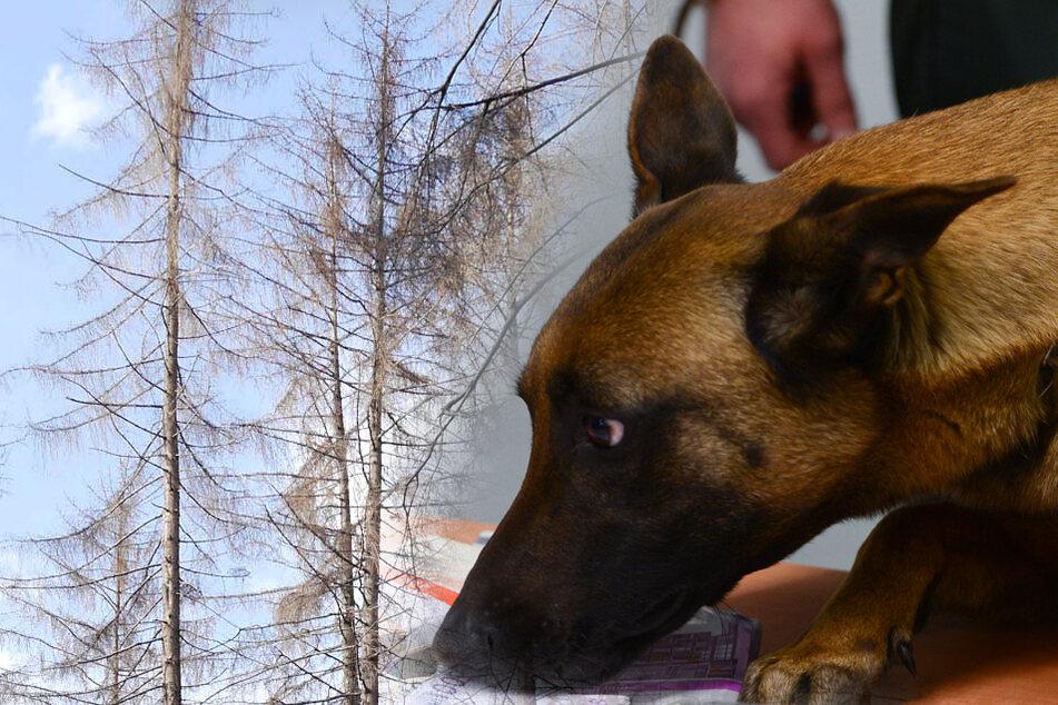 Drogenspür-Hunde bekommen neue Aufgabe: Es geht um unseren Wald!