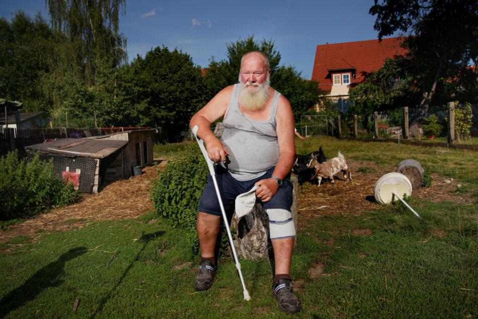 Hobby-Landwirt Jürgen Müller (73) aus Dresden-Weißig trauert um seinen Liebling Anni. Zwei Ziegen sind ihm nach dem Wolfsriss noch geblieben.