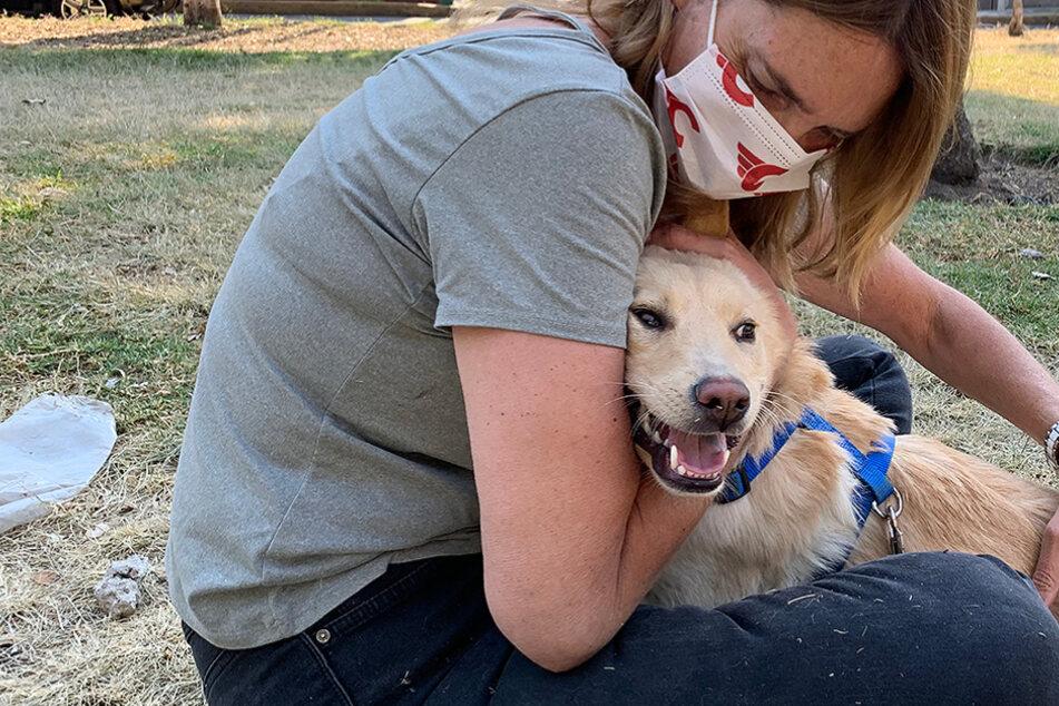 Hund allein gelassen und missbraucht: Nun meinte es das Schicksal endlich gut mit ihm