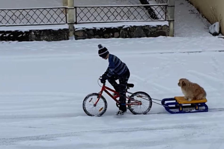 Hund genießt den Schnee in vollen Schlitten-Zügen!