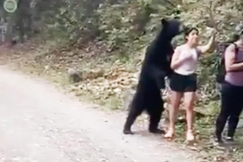 Ein Braunbär ging auf Tuchfühlung mit einer völlig furchtlosen Frau.