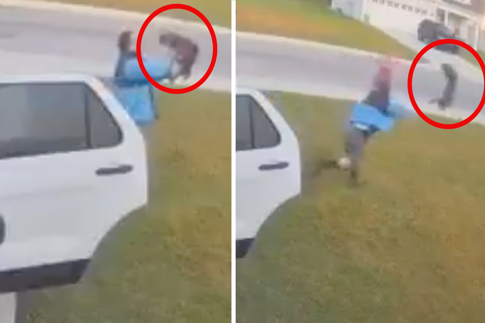 Man vs. bobcat: incredible video of wild suburban attack goes viral!