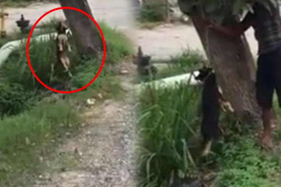 Mann hängt Hund grausam an Baum auf: Doch er ahnt nicht, was auf ihn zukommt