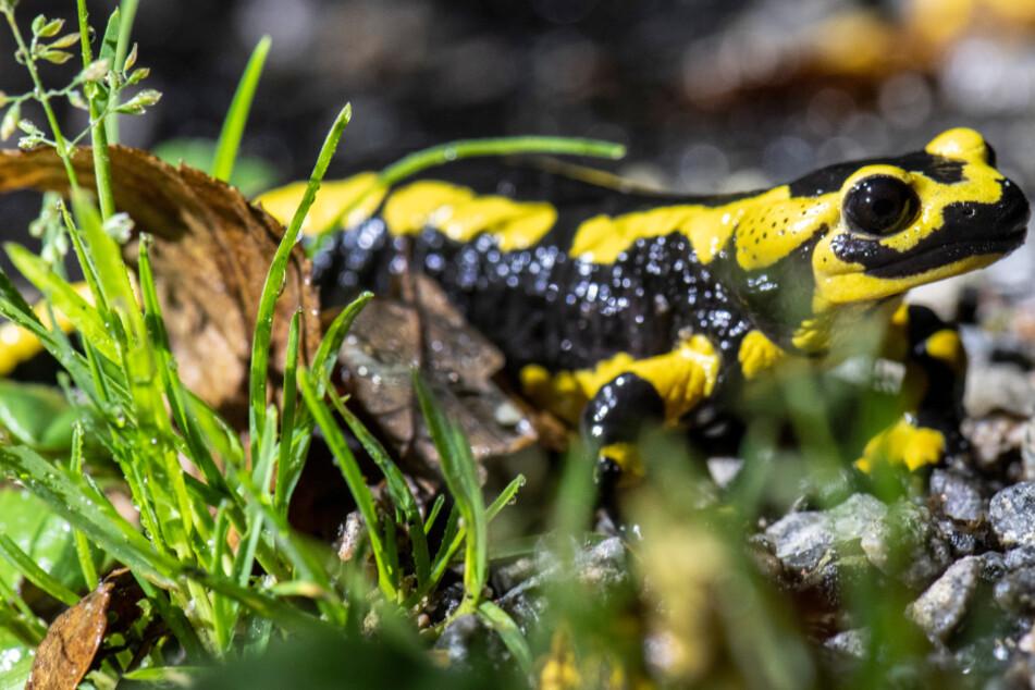 Amphibien in Not: Feuerwehrleute helfen mit 50.000 Liter Wasser