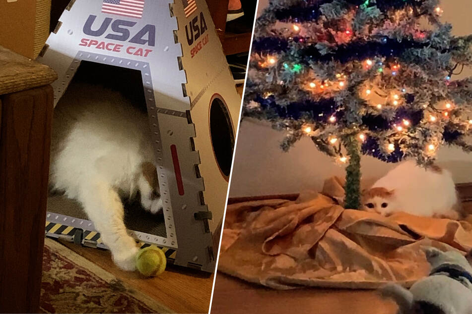 Christmas-loving cat gets a new hangout that is out of this world!