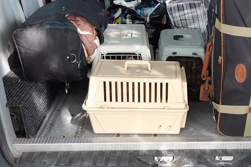 Der Fahrer hatte drei Transportboxen mit insgesamt fünf Welpen im Kofferraum.