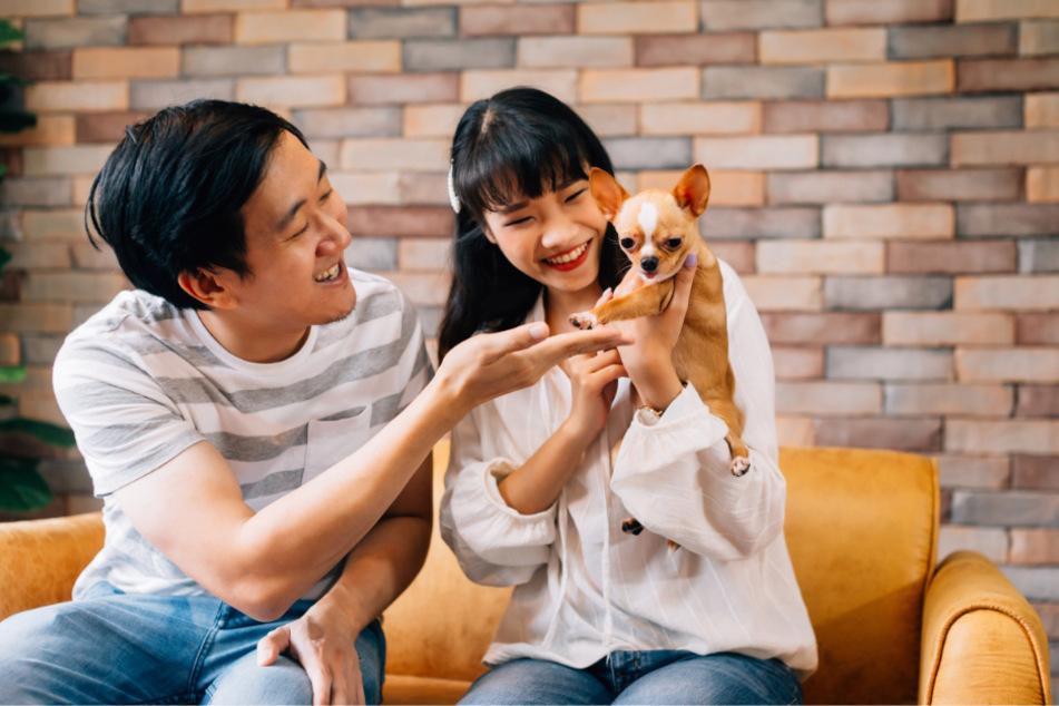 Chinesen lieben ihre Haustiere. Umso verständlicher ist es, dass sie nicht zu Hause mit ihnen eingesperrt sein wollen. (Symbolbild)