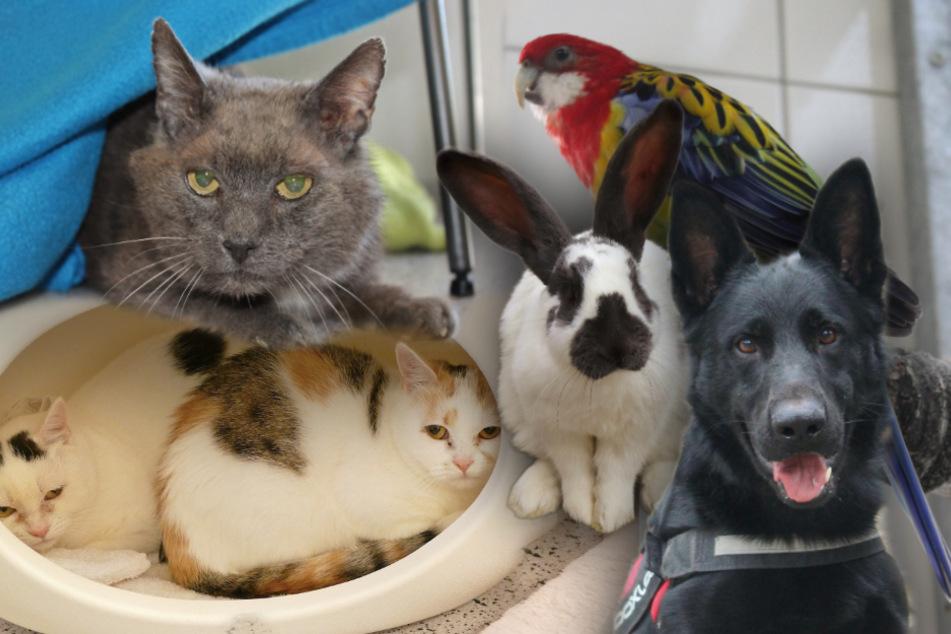 6 besondere Hunde, Katzen und Kaninchen: Diese Tiere suchen dringend ein Zuhause