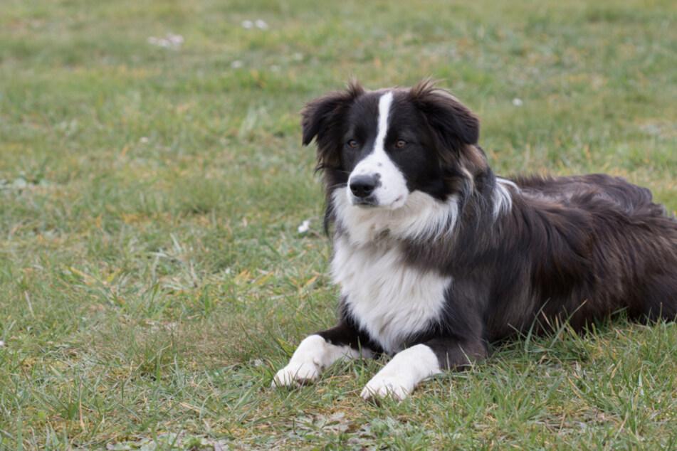 Hund tödlich vergiftet: Tierhasser im Ostallgäu unterwegs?