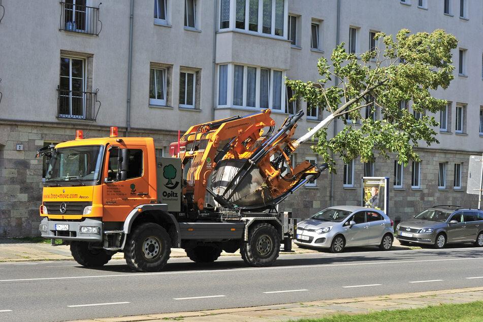 Achtung, Baum schert aus! Der Spezialbagger nimmt die Krim-Linde huckepack und fährt sie über die Zschopauer Straße in den Park.