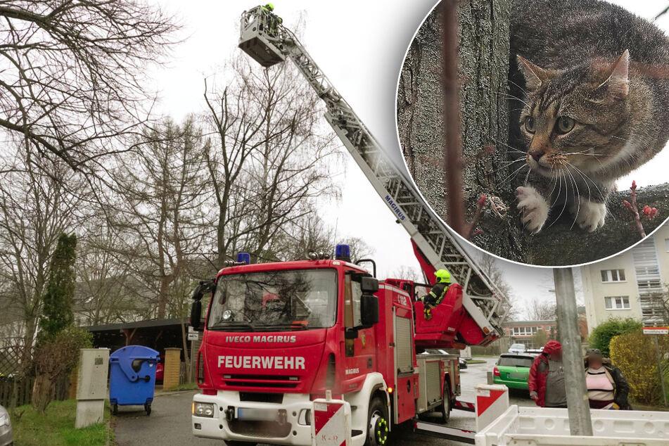 Chemnitz: Feuerwehreinsatz in Chemnitz: Katze auf Baum gefangen