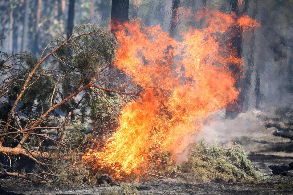 Viel Sonne in NRW: Gefahr von Waldbränden steigt weiter