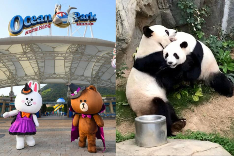Zoo schließt wegen Corona: Pandas haben endlich ungestörten Sex