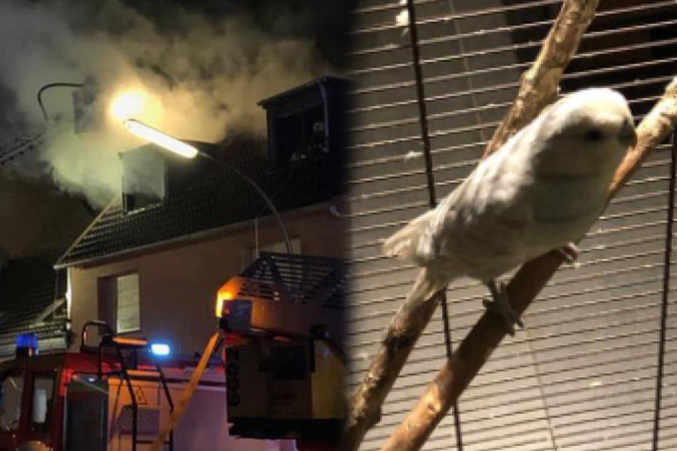 Wellensittich und Schwanzlurche in brennendem Haus eingeschlossen, dann kommt die Rettung