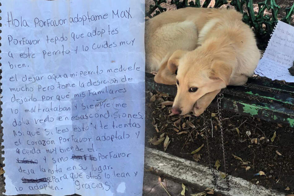 Woman finds lonely dog abandoned on a bench with a heartbreaking note