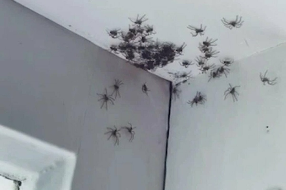 Little girl's bedroom becomes creeping, crawling nightmare