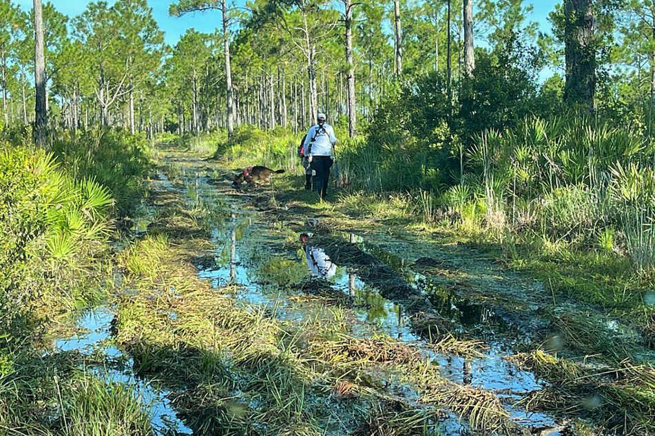 Beamte der Strafverfolgungsbehörden durchsuchen das ausgedehnte Carlton Reserve in der Gegend von Sarasota (Florida) nach Brian Laundrie.