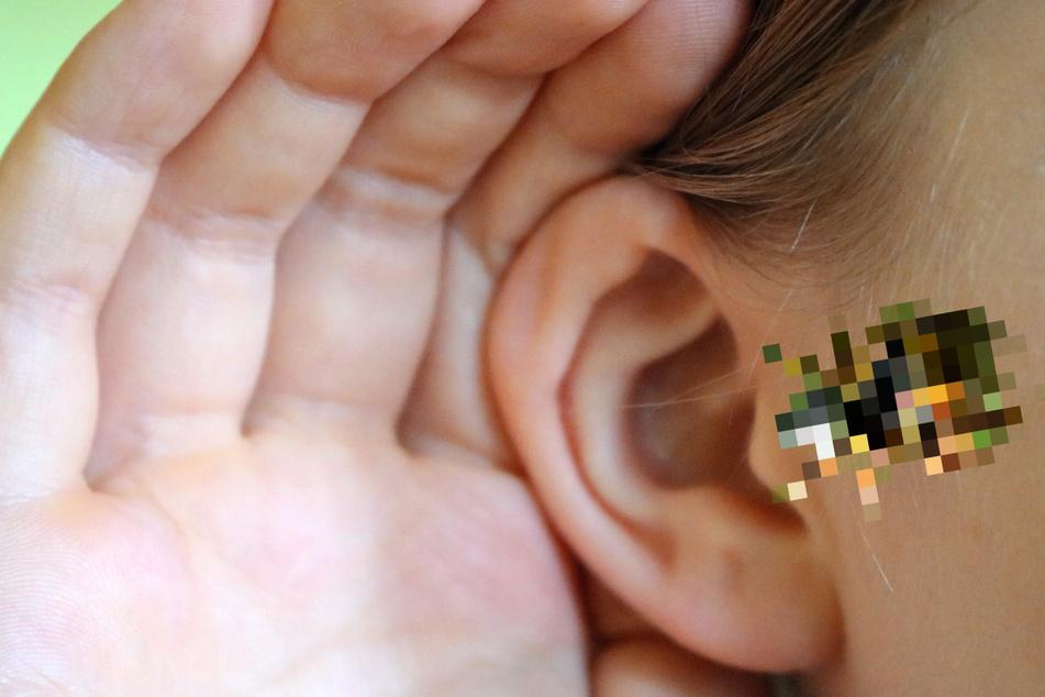 Frau fühlt sich nach Baden im Teich krank, dann krabbelt etwas aus ihrem Ohr