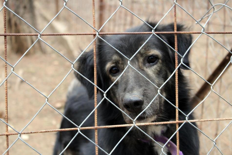 Ein Leben im Tierheim ist für Hunde langfristig nicht lebenswert, eine gute Idee also, dort einen zu kaufen.