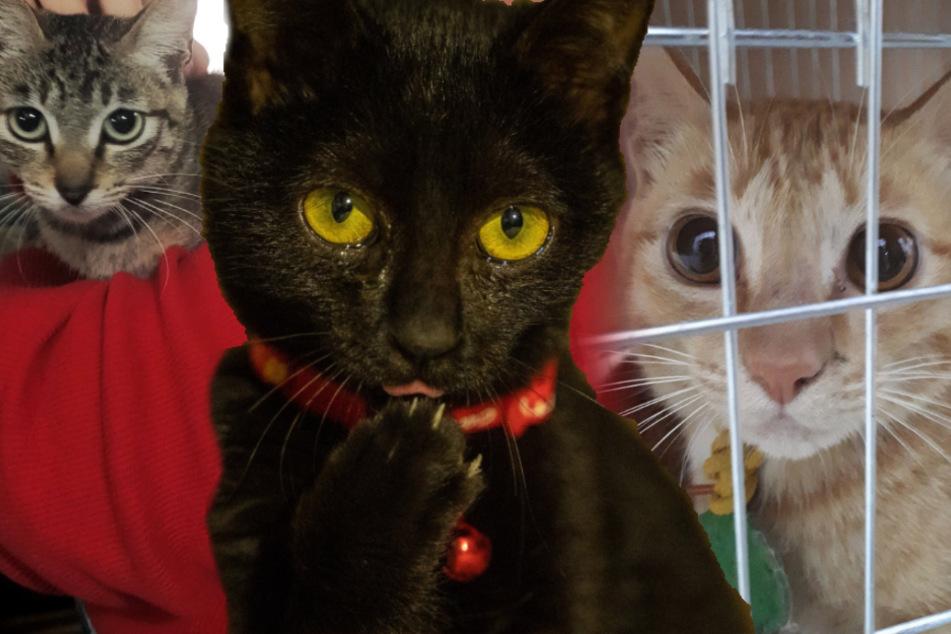Katzen warten im Käfig darauf, getötet und dann gekocht zu werden