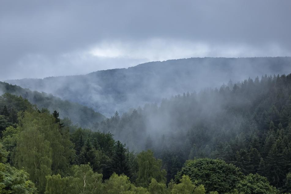 Das rauere Klima auf dem Erzgebirgskamm hält Kraniche nicht davon ab, in den Wäldern nahe der tschechischen Grenze zu brüten.