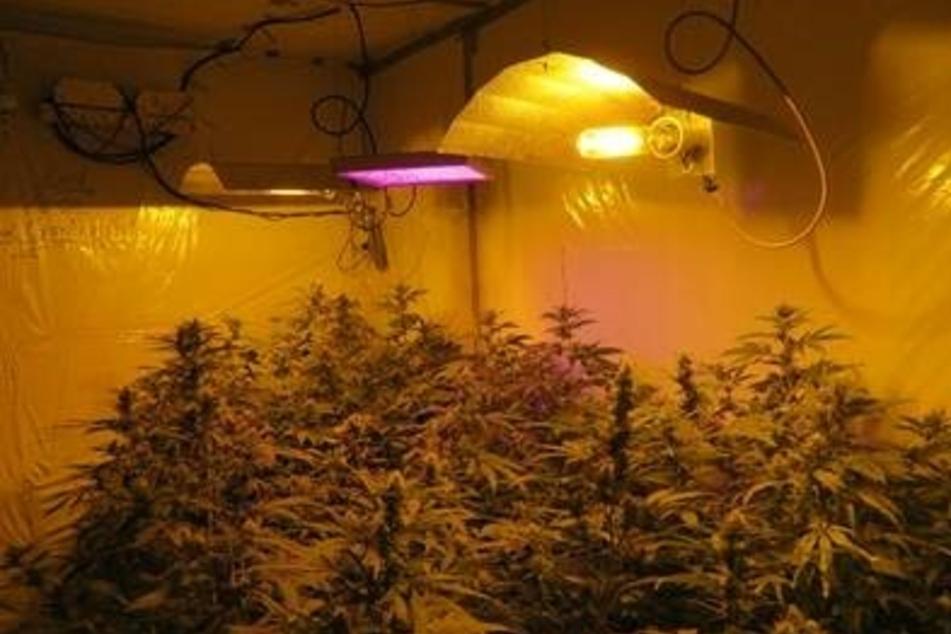 Görlitzer Polizei entdeckt Drogenplantage in der Wohnung eines 21-Jährigen