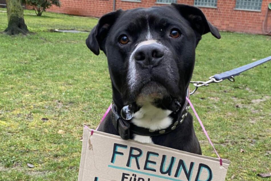 Hunde: Freunde fürs Leben, nicht für den Lockdown!
