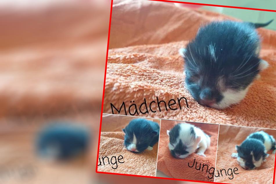 Nachwuchs im Tierheim Delitzsch! Hallo Silvester, Mimi, Günther und Luxi!