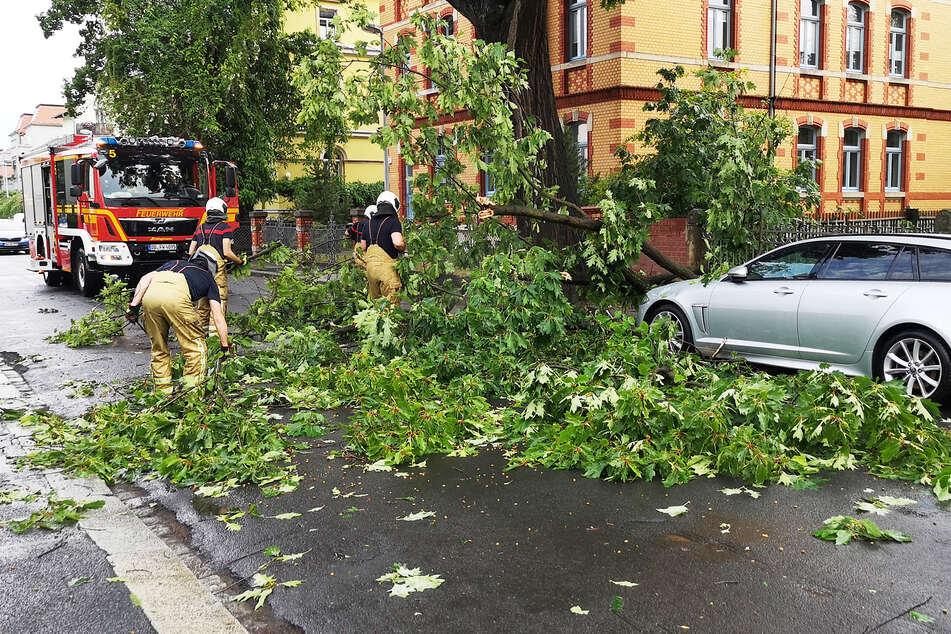 In Dresden-Laubegast stürzten Teile eines Baumes auf ein Auto.