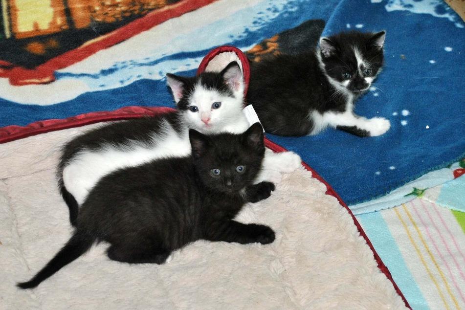 In der Katzenstube des Tierheims ist einiges los!