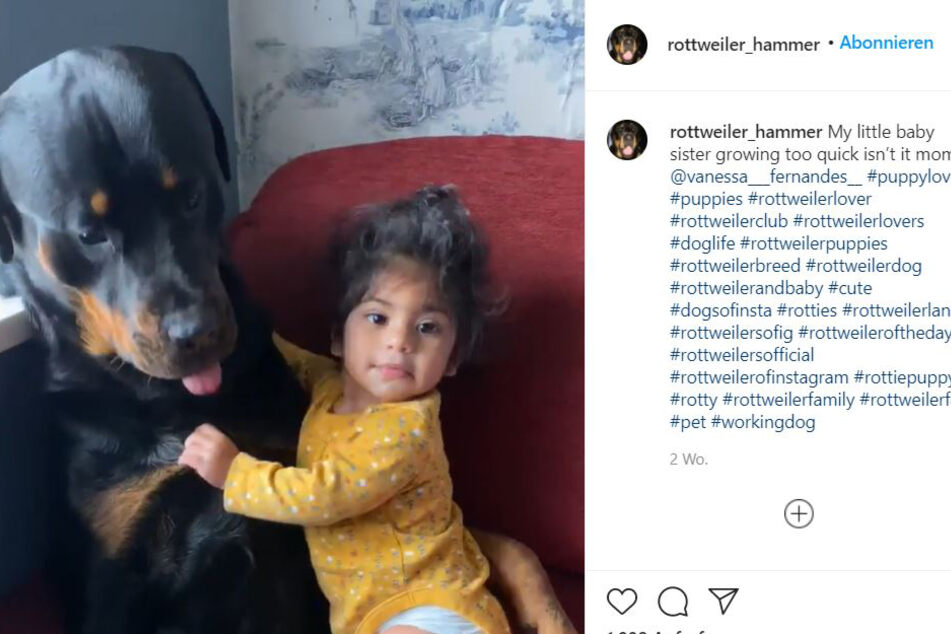 One heart and one soul: Baby Olivia and Rottweiler Hammer