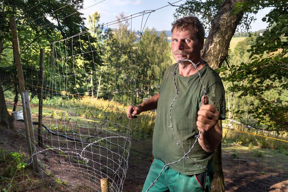 Ein Loch von zwei mal zwei Meter schnitten Vandalen in den Zaun - Falk Ihle kann es nicht fassen.