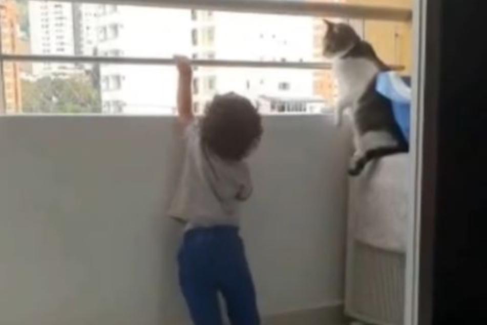 Die Katze beobachtete ihren menschlichen Freund mit Argusaugen.