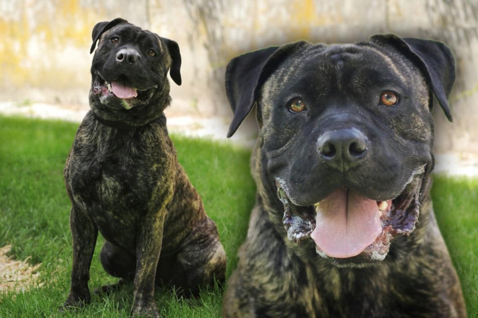Axel ist bereits in der Münchner Hundeschule fleißig, hat aber noch einiges zu lernen.