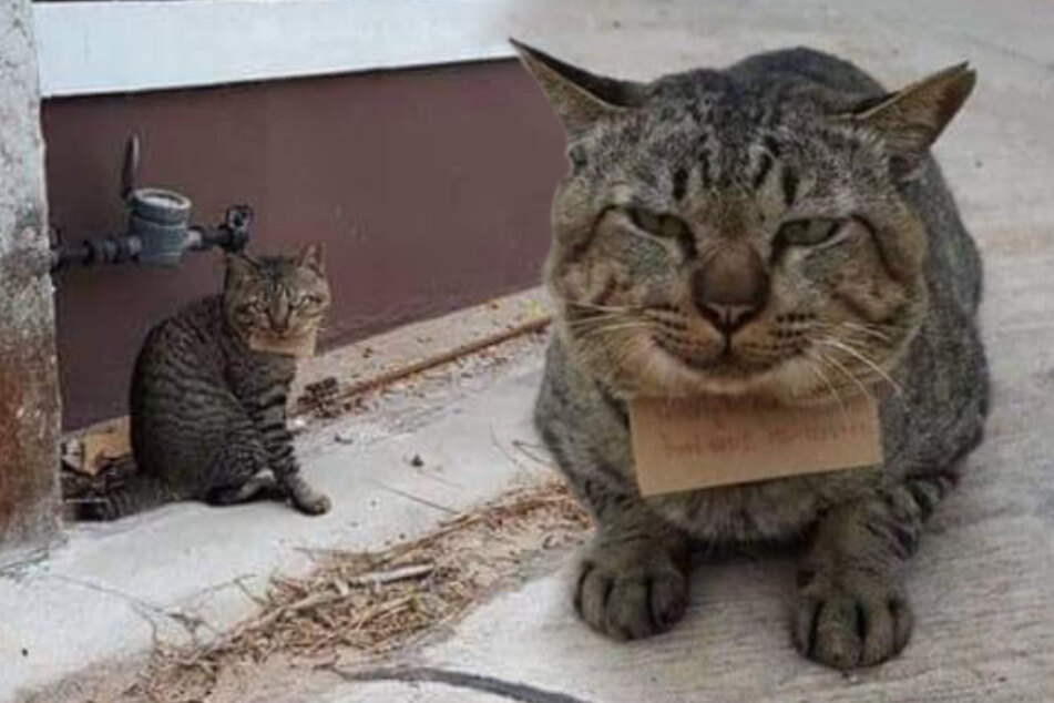 Missing cat strolls home with a note and a satisfied smile