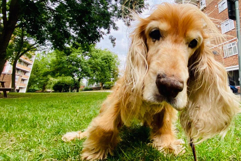 Diese Hundedame heißt Chapter, ist 15 Jahre alt und sieht nicht mehr besonders gut. Aber Lebensfreude hat sie offenbar noch jede Menge.