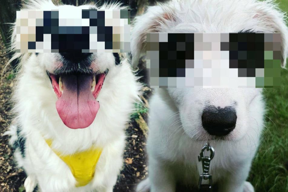 Zahlreiche Menschen sind sich einig: Dieser Hund sieht aus wie ein Panda!