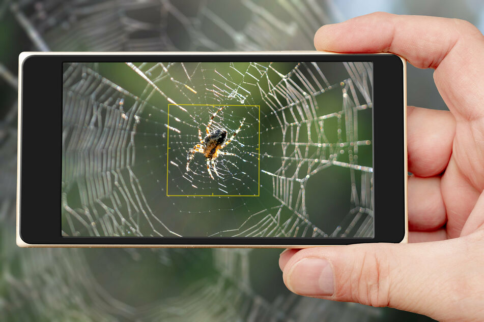 This augmented reality app can help you conquer your fear of spiders