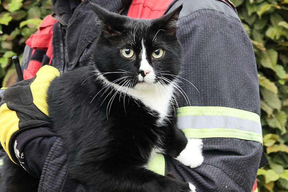 In Sicherheit! Ein Feuerwehrmann rettete eine Katze aus dem brennenden Wohnhaus.