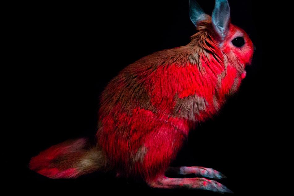 Leuchtende Tiere per Photoshop? Nein – sondern ein natürliches Phänomen: Fluoreszenz.