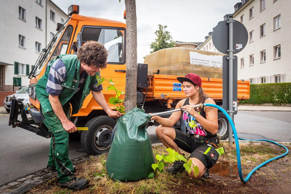 Auch in Chemnitz setzt man auf Bewässerungssäcke für Jungbäume. Lisa Uhlig (20) und Sebastian Müller (34) füllen im Auftrag des Grünflächenamtes Beutel mit Wasser auf dem Chemnitzer Kaßberg.