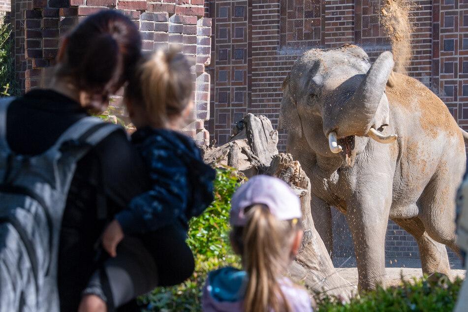 Besucher im Zoo Leipzig beobachten die Elefanten. Für Franzi seien Streichelzoos mit genug Auslauf zwar in Ordnung. Für die Haltung von exotischen Tieren habe sie jedoch kein Verständnis.