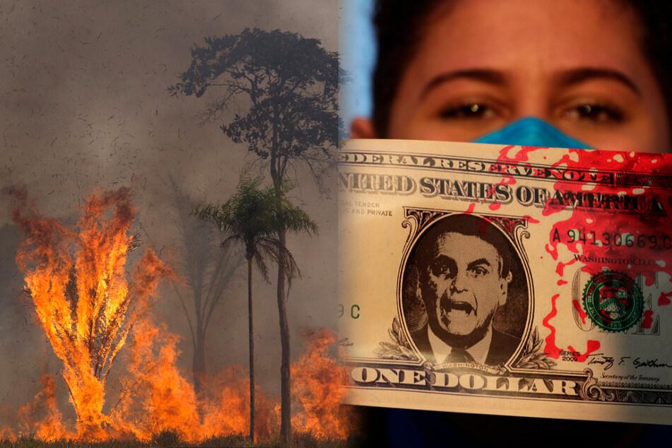 """Amazonas-Brände mit neuem Rekord: """"Trauriger Moment für den Wald und seine Völker"""""""